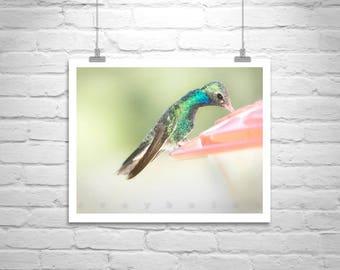 Bird Picture, Hummingbird Art, Bird Photography, Bird Wildlife, Bird Print, Nature Photography, Bird Art, Garden Art, Cute Birds