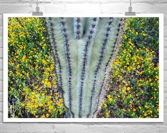 Cactus Picture, Saguaro, Arizona Desert, Tucson Arizona, Picacho Peak, Wildflowers, Cactus Art, Botanical Picture, Sonoran Desert