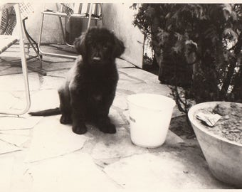 Original Vintage Photograph Snapshot Black Puppy Dog by Bowl Outdoors 1960s