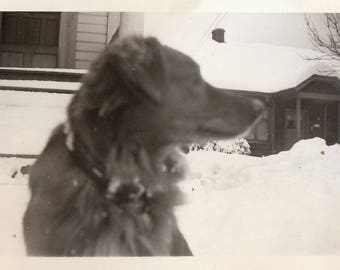 Original Vintage Photograph Snapshot Dog Close-Up in Snow  1940s