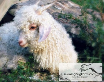 2 Ounces White Mohair Yearling Angora Goat Wool Raw Spinning Fiber Unwashed Cruelty Free from Sweet Mr Vanilla Bean Eco Family Farm in USA