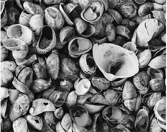 Seashell Photograph, Beach Decor, Still Life Print, Ocean Photo, Nautical, Fine Art Photography, Coastal Picture, New England, Black, White