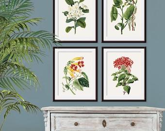 Vintage Garden Botanicals (Industrial Botanicals Series B4) Set of 4 - Art Prints (Featured Soft Cream) (Nature Woodland Inspired Plants)