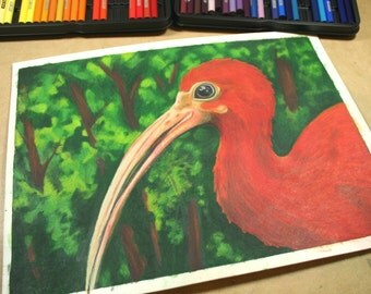 Scarlet Red Ibis . Colored Pencil Original Drawing . Bird Nature Art . Prismacolor Pencil Drawing