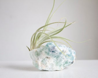 Air Plant on Fluorite, Raw Sea Green Crystal Chunk, Air Planter, Boho Mermaid Decor, Seaside Cottage, Beach House decor