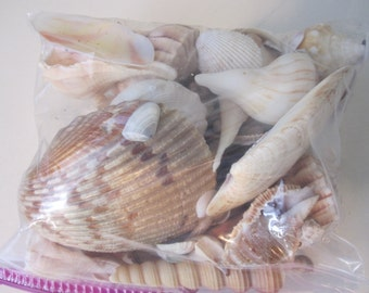 Bag o shells, art supplies, craft supplies, fine junk