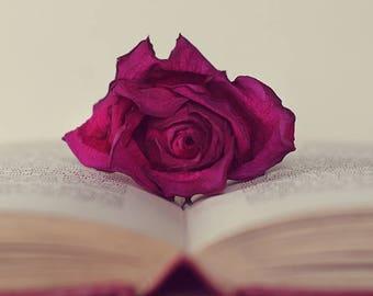 Beauty and the Beast Inspired, Fine Art, Photograph, Photography, Photo, Wall Decor, Print, Book, Rose, Story, Kids, Fairy Tale, Nursery