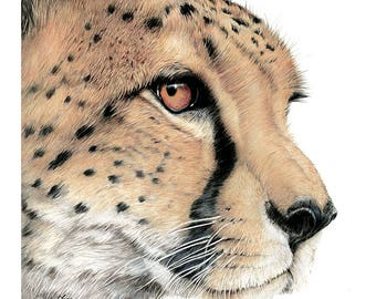 Cheetah - Limited Edition Giclee Print from an Original Painting