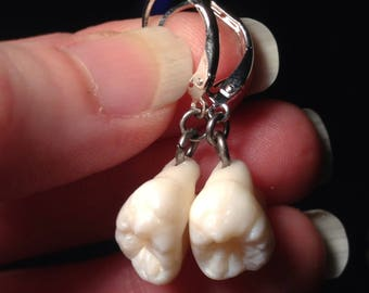 YOUR SUPPLIED TEETH - Real Human Teeth Earrings with Sterling Silver Leverback and Silver Gilded Roots