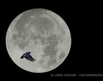 Full Moon with Black Crow Flying By - Nature Lunar Wall Art Home Decor Digital Download Linda Fischer Fine Art Photography Fischerimages