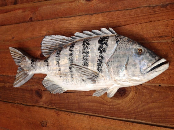"""Sheepshead 31"""" chainsaw wood saltwater fishing carving wall mount indoor/outdoor home and living sculpture one of a kind Todd Lynd art"""