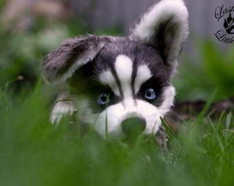 Puppy Husky Cahors (made to order)