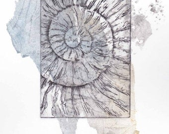 Original ammonite fossil zinc etching no.61 with chine colle jurassic Dorset coast fossil spiral fossil ammonites golden section