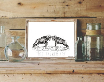 Battling Rams Drawing- Giclee Fine Art Print - Pen and Ink Illustration - Ram Illustration