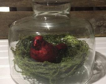Glass Dome Christmas Moss Nest Cardinal Bird Cheese glass dome Shabby Chic