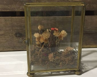 Vintage Curio Shadowbox Holder Display Case dried flower decor boho home