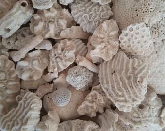 Real Coral Golf Ball, Starlet, Rose coral Palm Beach find Garden & Aquarium Decor Fairy Garden Coastal Cottage Decor