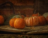 Pumpkins fine art photo, orange brown photo, rustic, pumpkins in shed, Halloween photo