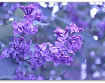 Flower Print, Lilac Print, Flower Photography, Fine Art Photography, Bokeh, Nature Photo, Purple Flower Photo, Floral Print, Floral Wall Art
