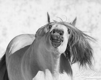The Grey Stallion Fools Around - Fine Art Horse Photograph - Horse - Lusitano - Fine Art Print