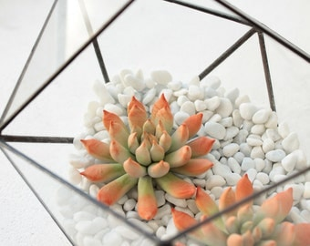 Orange Succulent Fairy Garden in Cup Ideas Polymer Clay Succulent Home House Decor Decoration Modern Minimalist Home Style Housewarming