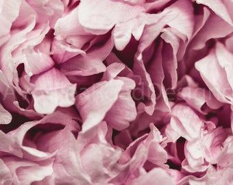 Fine art print, Wall art, Home decor, Pink peony, Floral, Photo print, Ava
