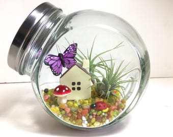 Air Plant Wonderland Terrarium - Air Plant Fairy Garden Terrarium, Butterfly Terrarium, Fairy Garden Decor, Gift for Family, Wedding Gift
