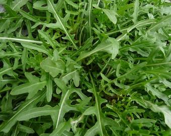 Heirloom Rustic Arugula Seeds