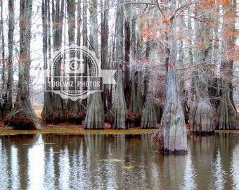 Lake Photograph Bayou Print Water Photography Red Moss 8x10 Trees Fall Trees Swamp Lake Photo Water Red Tree Louisiana Lake Bistineau