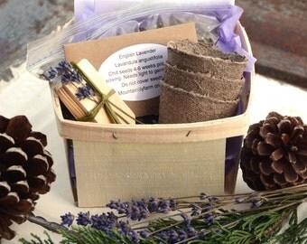 Lavender Garden Kit, English Lavender Seeds, Lavender Garden Gift Set, Seed Starting Supply, Great Hostess Gift or Gift for Mom