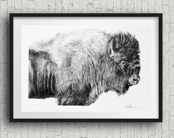 buffalo Art Print bison art print  B&W 20x30