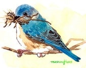ACEO Original watercolor painting- Bluebird building nest, Gift for bird lovers, Miniature painting, Gift idea for her
