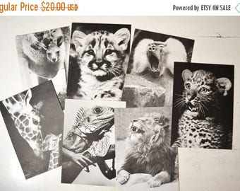 SALE Big lot of vintage Animals Zoo print Book Plate 1970s