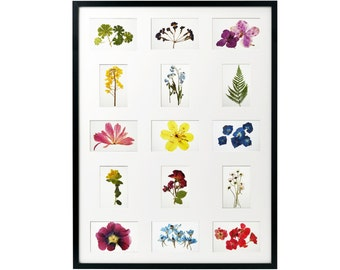 Botanical print set of 15 Herbarium Wall art set Dried pressed flowers Flower prints wall art Botanical print set Photo Collage frame