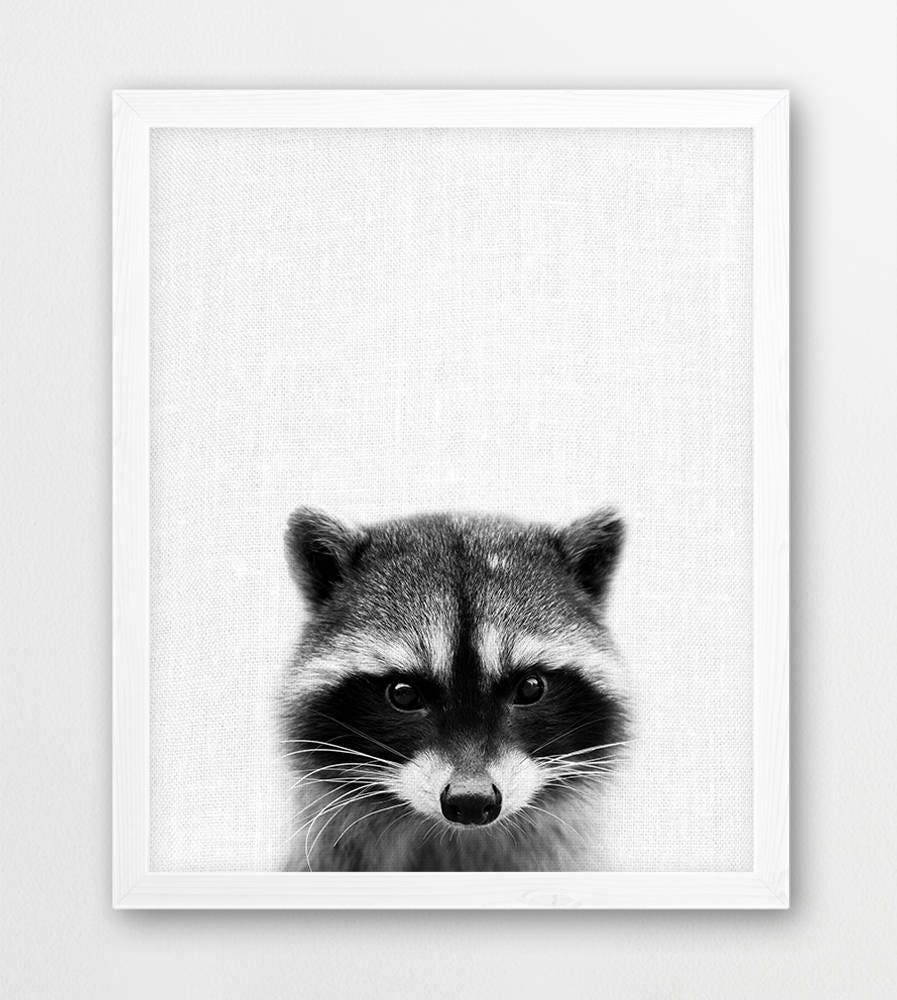 raccoon print baby raccoon photo print woodlands animals
