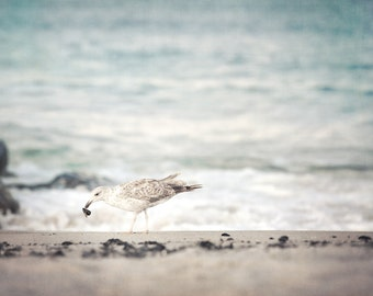 Sea Gull Photograph, Ocean Print, Shore Decor, Coastal Art, East Coast