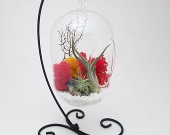 "Air Plant Terrarium Kit with 8"" Oval Glass and Geode Crystal / DIY Tillandsia Gift / Sunburst On Ice"