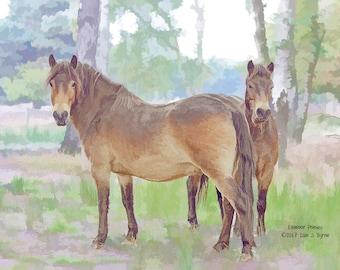horse print, horse art, animal print, animal art, horse photography, horse wall art, horse décor, equine print, equine art, Exmoor pony