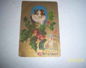 1910's Christmas card with Collie Dog Holly Postcard