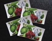 Strawberry Dragon Magnet Set of 4
