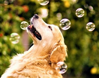 Dry Dog Shampoo - Soothing Skin Care For Dogs, Herbal Dog Shampoo, Organic Dog Shampoo, Natural Dog Bath, Dog Deodorizer, Dog Skin Care