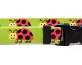 Ladybugs Standard Collar