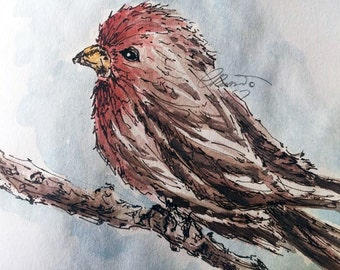 Watercolor Bird, Red Chest bird, Limited Edition Art Print, Nature Painting Bird, California Bird, Bird Watercolor Sketch, Bird Illustration