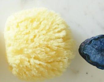 Natural Sea Sponge   Skinfoodie   Lather   Body Organic Sponge   EcoFriendly