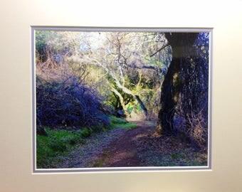 Carson Trail