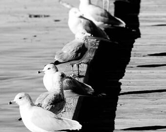 "Seagull Art, Black and White Photography, Beach Print, Bird Print, Seagull Wall Art, Coastal Decor, Seaside Art, Boardwalk - ""Seagulls"""