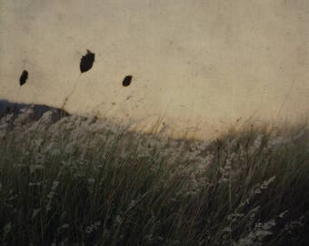 Sunset on the lawn in front of the beach in summer-Sicily. Photographic print. Print. Photography