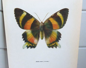 Vintage Moth Print circa 1965 by Prochazka, wall decor Book Plate