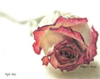 Realistic Rose Colored Pencil Drawing Print - Wall Art - Creative - Realistic Art Gift - © not included across - Mysti Marie Rose Tucker
