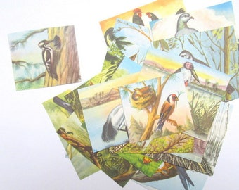 Vintage bird pictures: set of 25 illustrations cut from a vintage bird book. Craft supply for scrapbooks, collage, card making. OT588